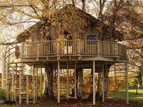 508528 casa da arvore fotos Casa da árvore: fotos