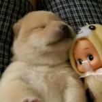 510713 fotos de filhotes fofos e engracados 28 150x150 Fotos de filhotes fofos e engraçados