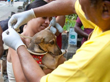 510855 coleira repelente para cachorro onde comprar 1 Coleira repelente para cachorro, onde comprar