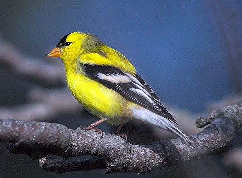 511348 fotos de passaros lindos e coloridos 1 Fotos de pássaros lindos e coloridos