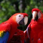 511348 fotos de passaros lindos e coloridos 21 150x150 Fotos de pássaros lindos e coloridos