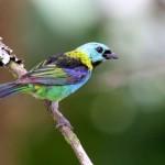 511348 fotos de passaros lindos e coloridos 23 150x150 Fotos de pássaros lindos e coloridos