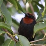 511348 fotos de passaros lindos e coloridos 28 150x150 Fotos de pássaros lindos e coloridos