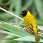 511348 fotos de passaros lindos e coloridos 29 150x150 Fotos de pássaros lindos e coloridos