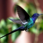 511348 fotos de passaros lindos e coloridos 33 150x150 Fotos de pássaros lindos e coloridos