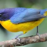 511348 fotos de passaros lindos e coloridos 34 150x150 Fotos de pássaros lindos e coloridos