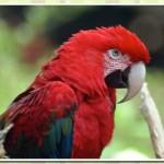 511348 fotos de passaros lindos e coloridos 5 150x150 Fotos de pássaros lindos e coloridos
