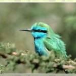 511348 fotos de passaros lindos e coloridos 6 150x150 Fotos de pássaros lindos e coloridos