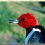 511348 fotos de passaros lindos e coloridos 7 150x150 Fotos de pássaros lindos e coloridos