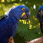 511348 fotos de passaros lindos e coloridos 8 150x150 Fotos de pássaros lindos e coloridos