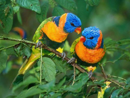 511348 fotos de passaros lindos e coloridos Fotos de pássaros lindos e coloridos