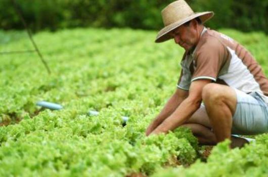 511604 Alimentos orgânicos não são mais nutritivos que os convencionais 1 Alimentos orgânicos não são mais nutritivos que os convencionais