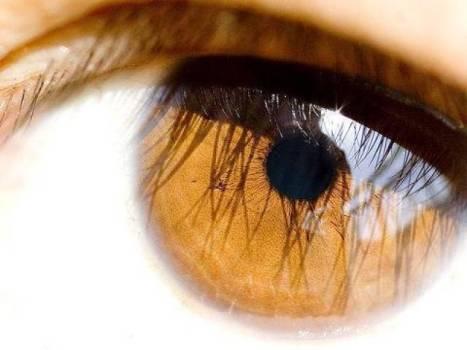 513526 36 dos brasileiros nunca foram ao oftalmologista 2 36% dos brasileiros nunca foram ao oftalmologista