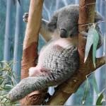 514378 animais fofos dormindo fotos 10 150x150 Fotos de animais fofos dormindo