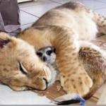 514378 animais fofos dormindo fotos 11 150x150 Fotos de animais fofos dormindo