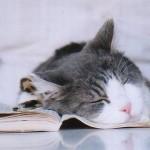 514378 animais fofos dormindo fotos 12 150x150 Fotos de animais fofos dormindo