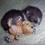 514378 animais fofos dormindo fotos 2 150x150 Fotos de animais fofos dormindo