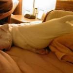 514378 animais fofos dormindo fotos 26 150x150 Fotos de animais fofos dormindo