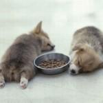 514378 animais fofos dormindo fotos 28 150x150 Fotos de animais fofos dormindo