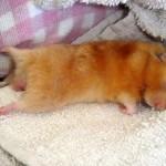 514378 animais fofos dormindo fotos 3 150x150 Fotos de animais fofos dormindo