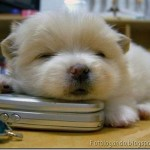 514378 animais fofos dormindo fotos 34 150x150 Fotos de animais fofos dormindo