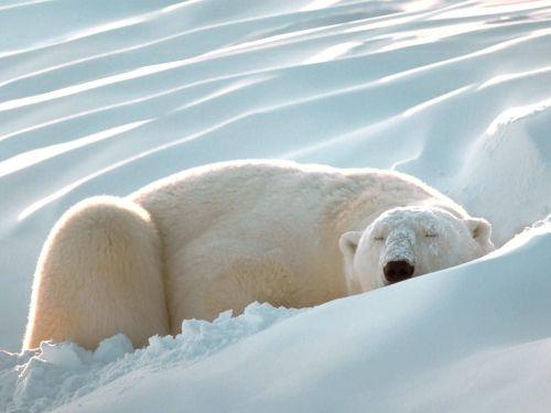 514378 animais fofos dormindo fotos 37 Fotos de animais fofos dormindo
