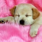 514378 animais fofos dormindo fotos 5 150x150 Fotos de animais fofos dormindo