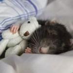 514378 animais fofos dormindo fotos 6 150x150 Fotos de animais fofos dormindo