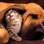514378 animais fofos dormindo fotos 7 150x150 Fotos de animais fofos dormindo