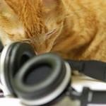 514445 fotos de gatos dormindo 14 150x150 Fotos de gatos dormindo