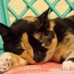 514445 fotos de gatos dormindo 16 150x150 Fotos de gatos dormindo