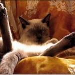 514445 fotos de gatos dormindo 20 150x150 Fotos de gatos dormindo