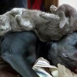 514445 fotos de gatos dormindo 22 150x150 Fotos de gatos dormindo
