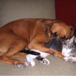 514445 fotos de gatos dormindo 29 150x150 Fotos de gatos dormindo