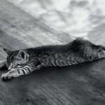 514445 fotos de gatos dormindo 4 150x150 Fotos de gatos dormindo
