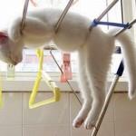 514445 fotos de gatos dormindo 5 150x150 Fotos de gatos dormindo