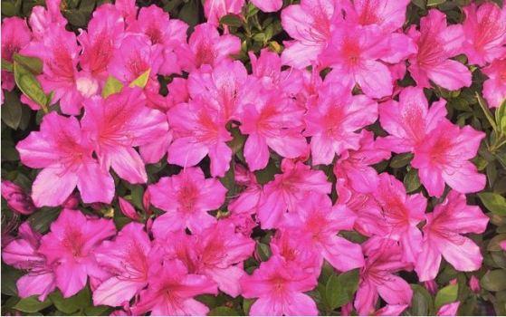 Plantas De Jardim Resistentes Ao Frio