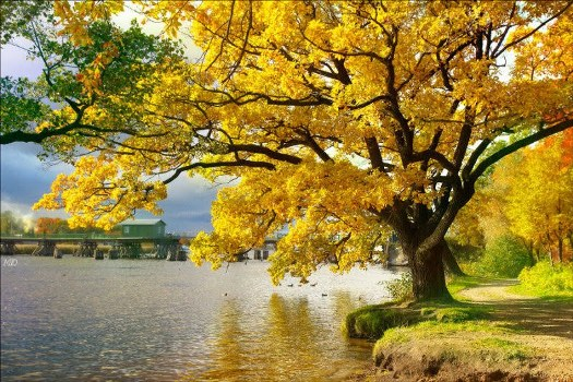 517307 21 de setembro Dia da Árvore 1 21 de setembro: Dia da Árvore