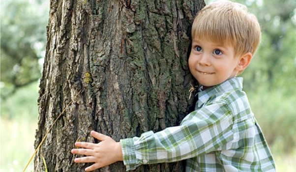 517307 21 de setembro Dia da Árvore 2 21 de setembro: Dia da Árvore