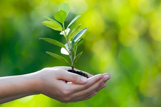 517307 21 de setembro Dia da Árvore 21 de setembro: Dia da Árvore