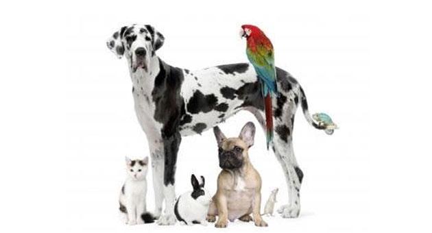 523610 dia dos animais 4 de outubro: Dia dos animais