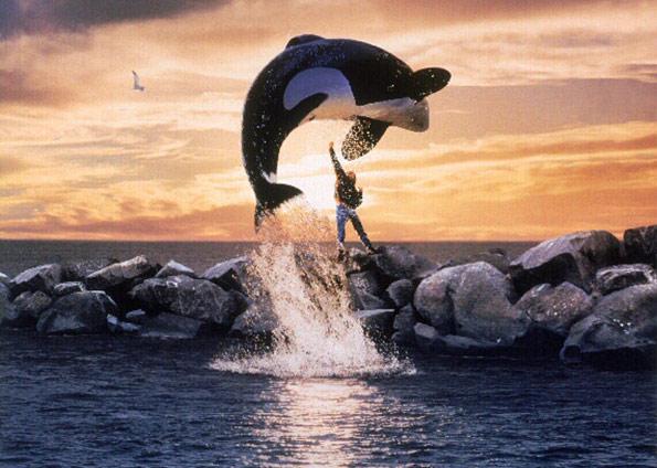 523610 keiko free willy 4 de outubro: Dia dos animais