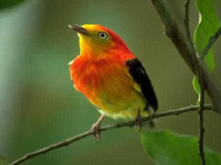 526950 como fazer cadastro no ibama para criar passaros Como fazer cadastro no Ibama para criar pássaros