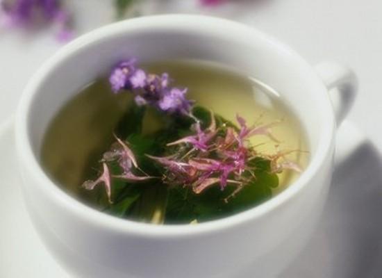527970 O chá de espinheira santa é a forma de consumo mais utilizada. Foto divulgação Espinheira Santa: para que serve, benefícios