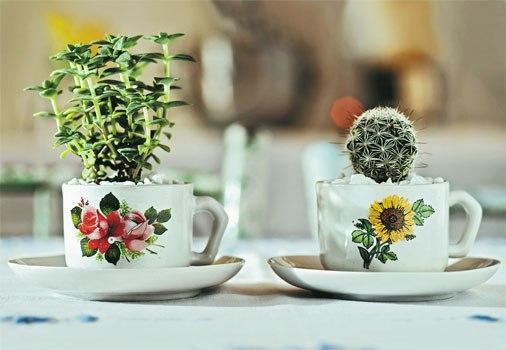 recipientes para plantas dicas ideias criativas