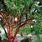 528520 decoracao de jardim para natal fotos dicas 13 150x150 Decoração de jardim para natal: fotos, dicas