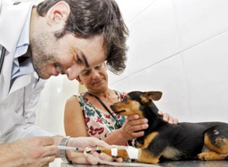 Hospital Público Veterinário para Cães e Gatos Endereço