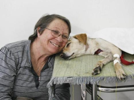 534221 Hospital Público Veterinário para Cães e Gatos Endereço Hospital Público Veterinário para Cães e Gatos Endereço
