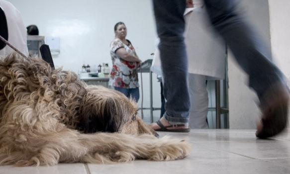 535025 Como marcar consulta no hospital público veterinário SP 2 Como marcar consulta no hospital público veterinário SP