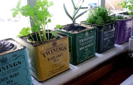 540248 Os temperos podem ser cultivados de várias formas. Foto divulgação Temperos caseiros: como cultivar